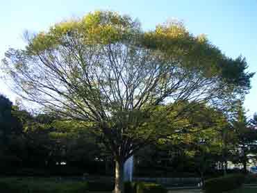 image_kaijyou-tree.jpg