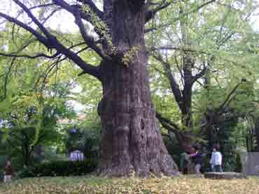 image_tree.jpg